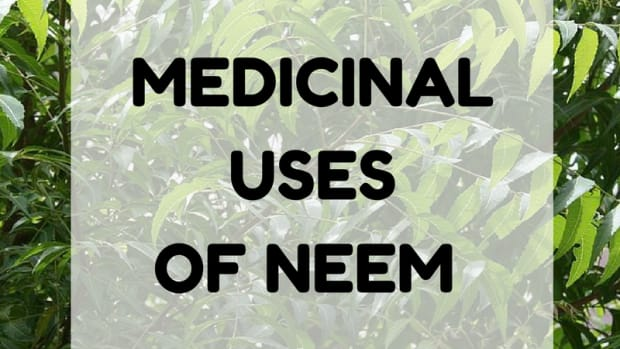 the-top-health-benefits-of-neem-tree-the-magic-tree