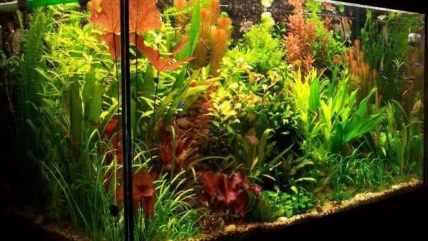 light-in-the-planted-aquarium