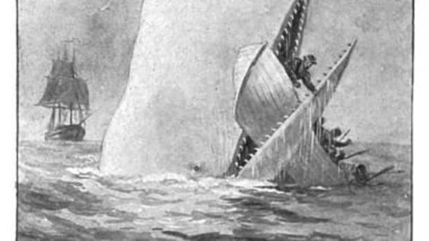 livyatan-melvillei-vs-megalodon-real-prehistoric-sea-monsters