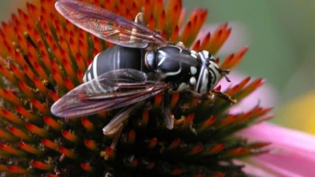 top-10-insect-mimics