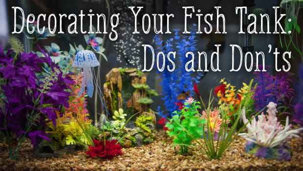 decorating-your-fish-tank-dos-and-donts