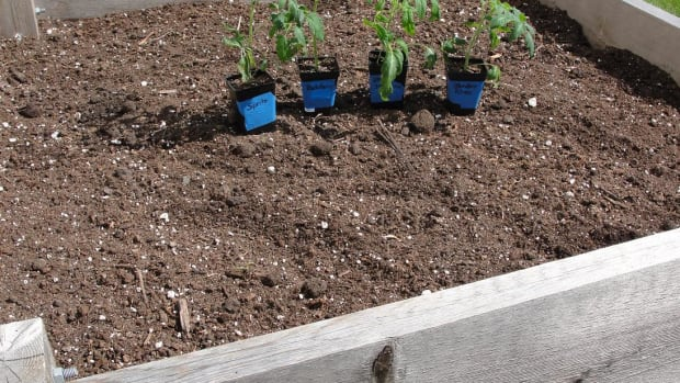 how-to-amend-raised-bed-garden-soil
