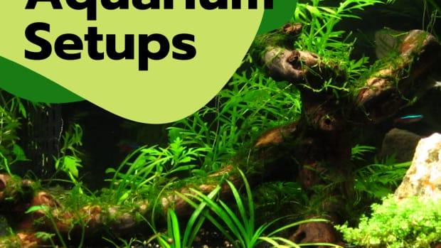 cheap-alternatives-to-an-aquarium-setup