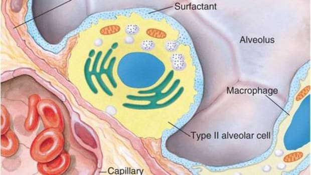 surfactant-lowering-pulmonary-surface-tension