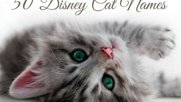 disney-cat-names
