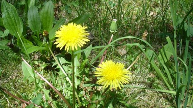 companion-planting-in-the-garden-good-and-bad-neighbours