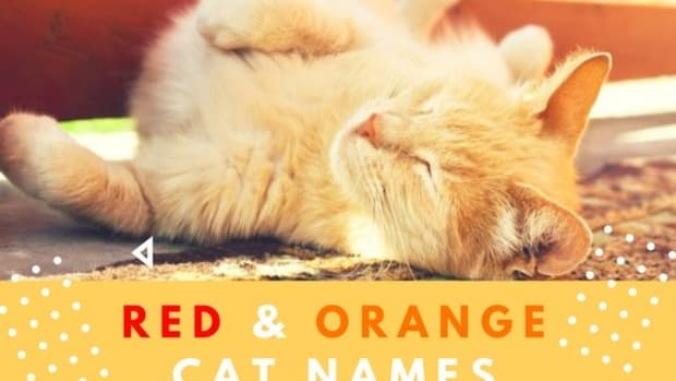 orange-cat-names