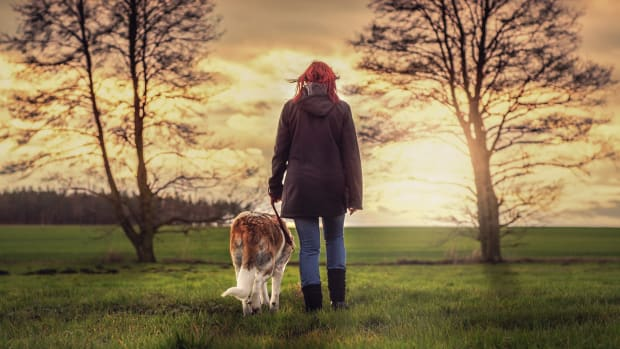making-your-dog-walking-business-the-top-dog