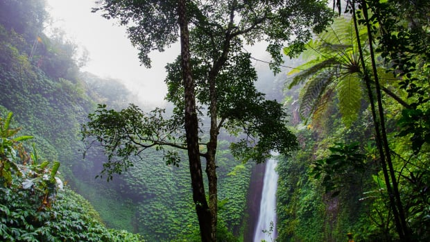 rainforest-trees