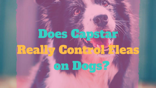 capstar-for-dogs-best-buys-and-how-to-use-it