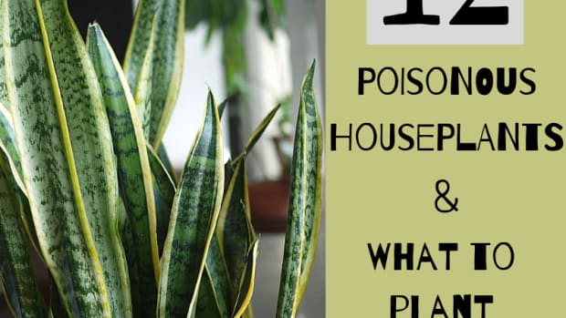 poisonous-house-plants-and-their-toxic-effects