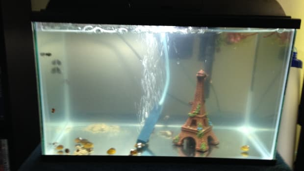 adding-freshwater-invertebrates-to-your-tank