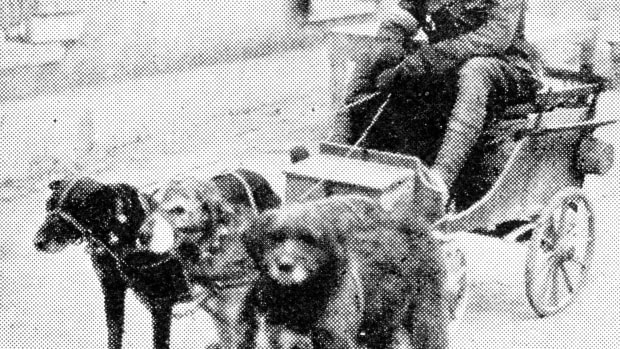 war-dogs-of-wwi-first-great-european-war-world-war-one-1914-1918