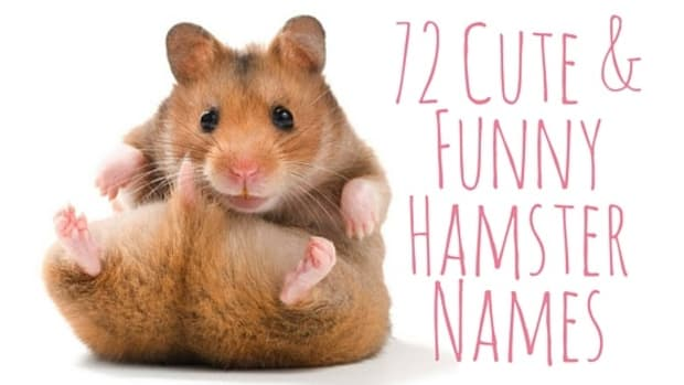 hamster-name-ideas