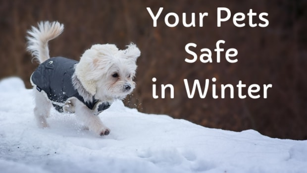 keep-your-pets-happy-and-healthy-during-the-winter-holidays-cold-weather-safety-tips-for-cats-and-dogs