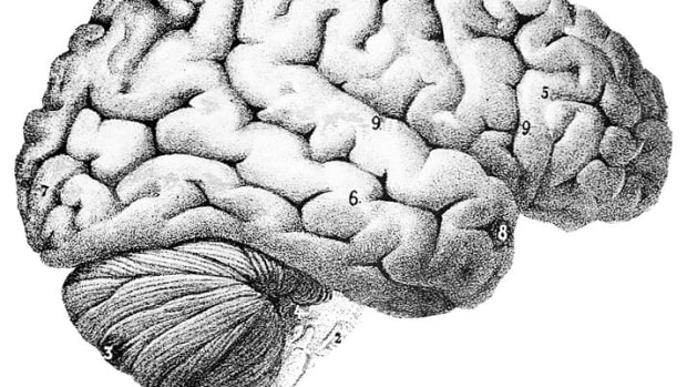 brain-training-improve-your-neuroplasticity-with-10-easy-tips