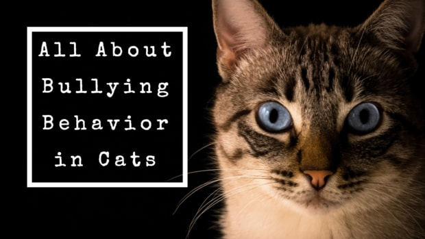 best-ways-to-stop-a-cat-from-being-a-bully