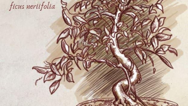 five-species-that-make-great-indoor-bonsai