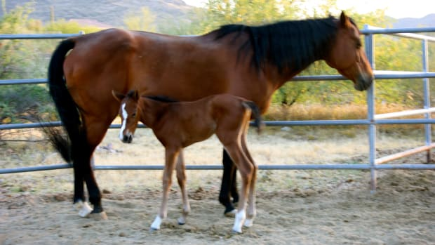 the-essential-foaling-kit-for-the-first-time-mare-owner