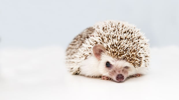 hedgehog-names