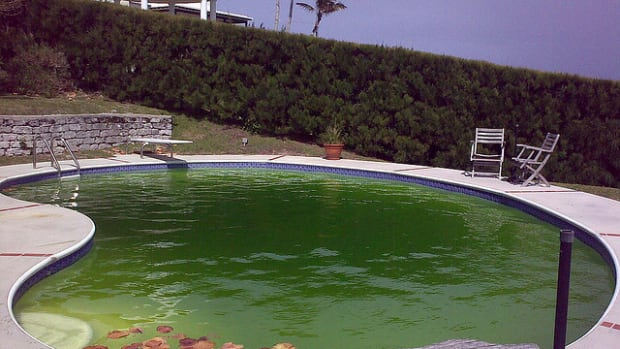 my-swimming-pool-is-green-how-to-clean-pool-get-rid-of-algae