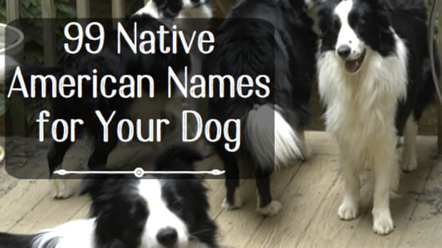 50-meaningful-native-american-names-for-male-dogs