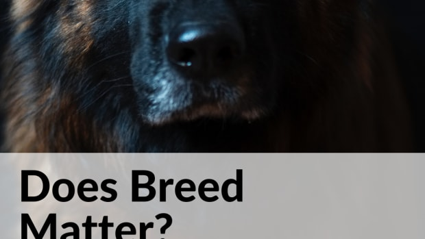 dog-breed-matters