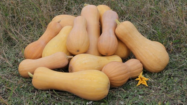 easist-way-to-cook-and-peel-butternut-squash