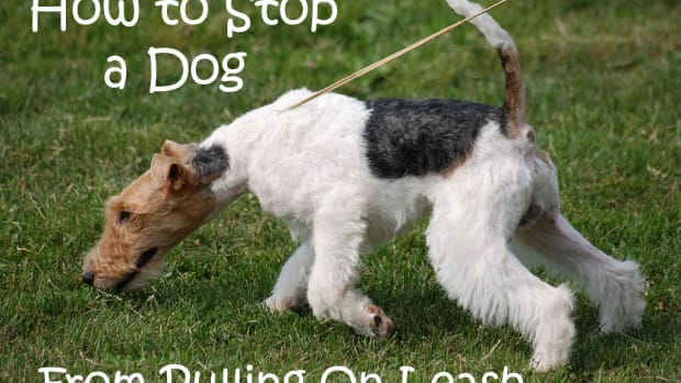 how-to-stop-a-dog-from-pulling-on-leash