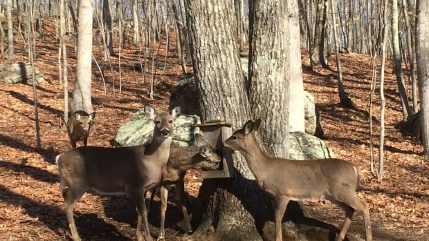 build-a-deer-feeder-to-attract-wildlife