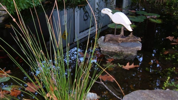 how-to-prepare-garden-pond-for-winter