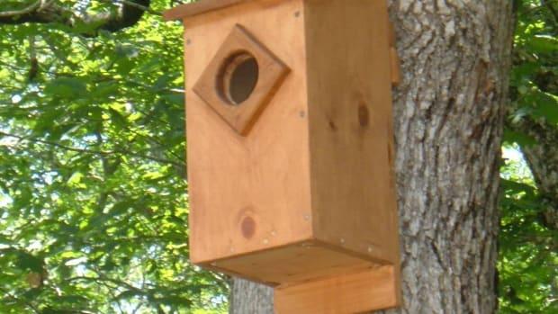 screech-owl-house