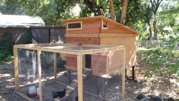 backyard-chicken-house-plans