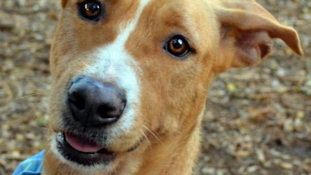 make-a-bandana-for-dogs