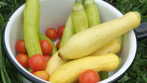 how-to-make-my-victory-garden-good-for-the-climate