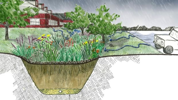 rain-gardens-complement-climate-victory-gardens