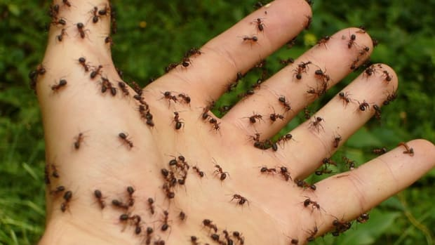 30-easy-diy-ways-to-get-rid-of-ants-at-home-and-garden-fast