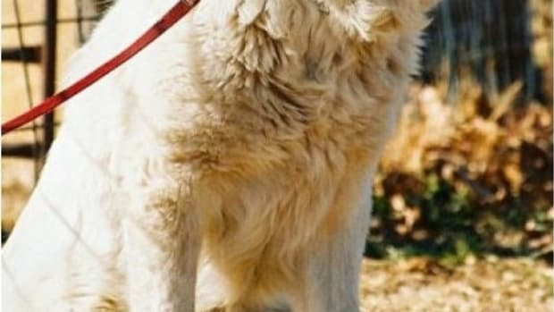 should-you-shave-your-dog-in-the-summer