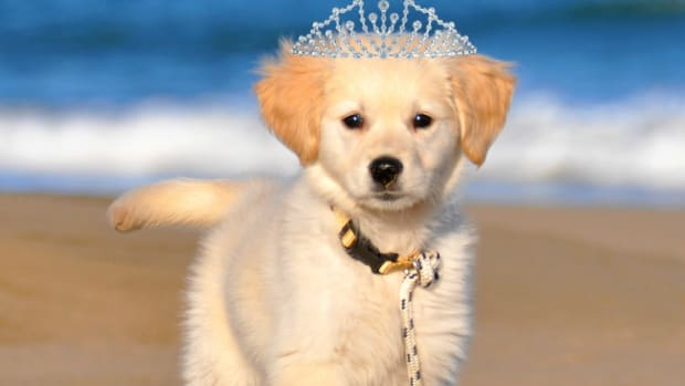 female-dog-names-50-most-popular-female-dog-names