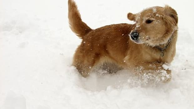 diseases-that-cause-seizures-in-dogs-canine-epilepsy