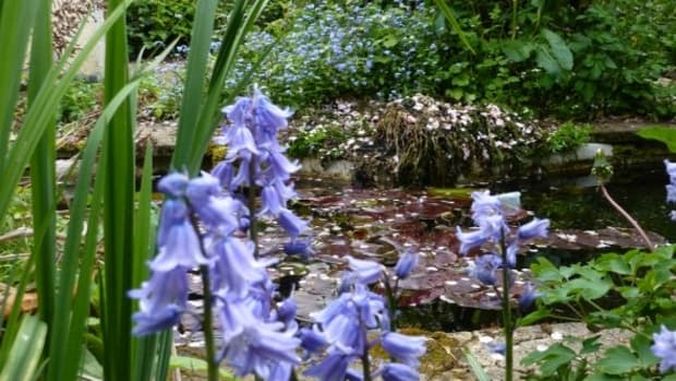 how-to-remove-leeches-from-your-pond-without-chemicals