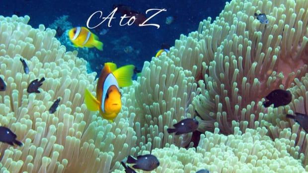sea-animals-list