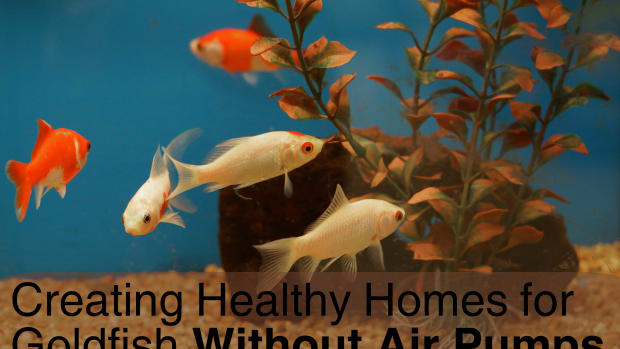 easy-ways-to-keep-fish-alive-on-a-fish-bowl-without-air-pump