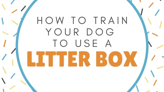 how-to-litter-box-train-your-puppy
