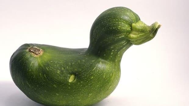 best-zucchini-recipes