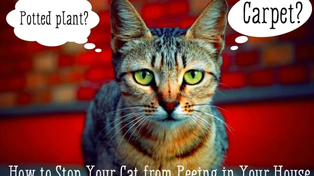 how-to-stop-your-cat-from-peeing-in-the-house