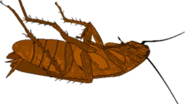 roach-love-story