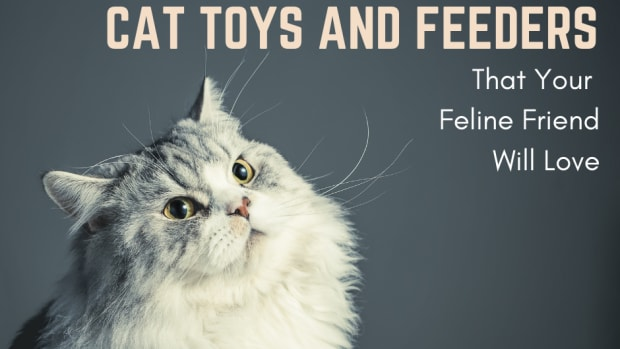 cat-interactive-feeder-toys