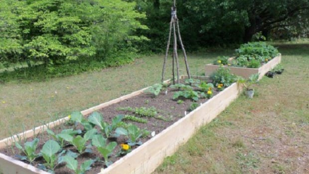 how-to-make-a-raised-bed-lasagna-garden