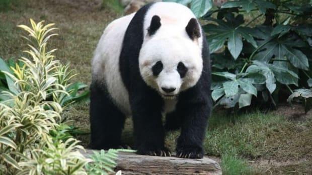 black-and-white-animals